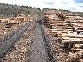 Log piles in Chopwell Wood - geograph.org.uk - 761044.jpg