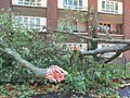 London 28 October 2013 Storm Damage in Highbury - panoramio.jpg