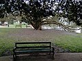 Long shot of the bench (OpenBenches 5508-1).jpg