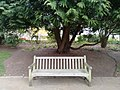 Long shot of the bench (OpenBenches 5570-1).jpg