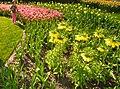 M^m Flores en el parque en la Haya - Creative Commons by gnuckx - panoramio (16).jpg