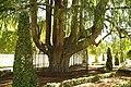 MADRID A.V.U. PARQUE DE MADRID (BUEN RETIRO) - panoramio (9).jpg
