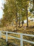 MINIFARMA - panoramio.jpg
