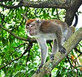 MONKEY BUSINESS (6010643359).jpg