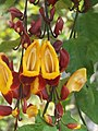 Madeira - Funchal - Jardim Botanico (2093601962).jpg
