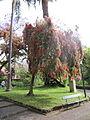 Madeira em Abril de 2011 IMG 1716 (5663175575).jpg
