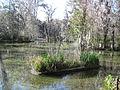 Magnolia Plantation and Gardens - Charleston, South Carolina (8556559038).jpg