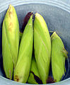 Maize corns India tamil word 13.3.jpg