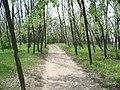 Majdan kroz šumu - panoramio.jpg