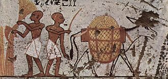 Donkey - Donkey in an Egyptian painting c. 1298–1235 BC