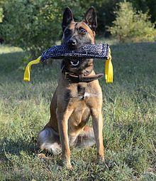 Image Result For Dog Training Made
