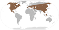 Mammut distribution without South America.png
