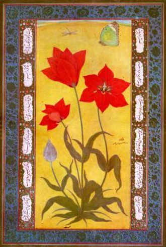 Ustad Mansur - Tulip from Kashmir (c. 1610) by Mansur Naqqash