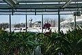 Marjorie McNeely Conservatory - Como Park Zoo (25100637975).jpg