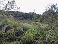 Medellin, Antioquia, Colombia - panoramio (9).jpg