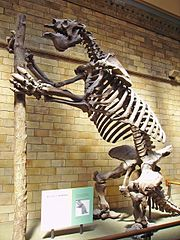 Skeleton of Megatherium americanum.