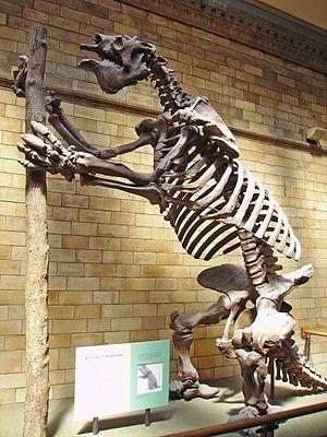 Megatherium - M. americanum skeleton, Natural History Museum, London