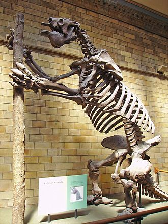 Megatherium - M. americanum skeleton, Natural History Museum, London