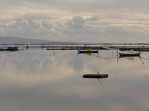 Aetolia-Acarnania - Messolongi lagoon
