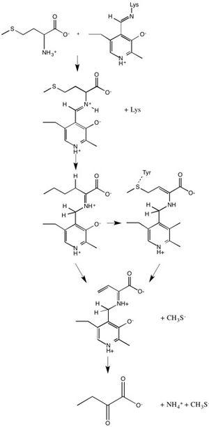 Methionine gamma-lyase