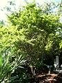 Miami Beach Botanical Garden - IMG 8040.JPG