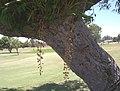 Middle of No 10 Fairway Nov 2007 - panoramio.jpg