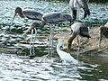 Migratory birds.jpg