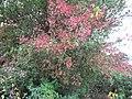 Mix of berries - geograph.org.uk - 1526244.jpg