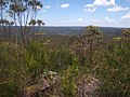 Mooney Mooney creek from Scopas Peak - panoramio.jpg