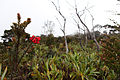 Mount Kemiri little red flowers.jpg