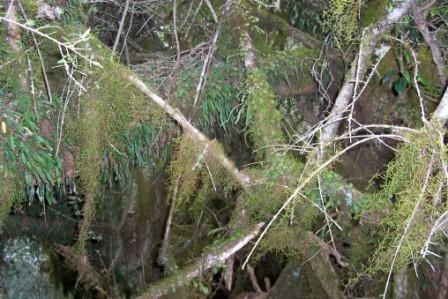 Mount Royal - moss forest
