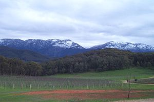Mount Buffalo National Park - View of Mt Buffalo in winter.