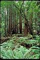 Muir Woods National Monument, California (97439a7b-b54a-4c75-b14c-0e3686f938e3).jpg