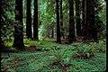 Muir Woods National Monument, California (f3efc75e-cf7c-47ac-a2f1-8b4ac6e845a2).jpg