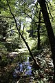 Muir Woods National Monument 2010 01.JPG