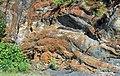 Muscovite schist (Precambrian; Blue Ridge, North Carolina, USA) 9.jpg
