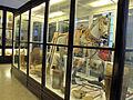 Museo antropologico, sezione africa, abissinia 01.JPG