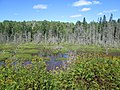 Muskrat or Beaver lodge, near Wallace, NS (42772414530).jpg