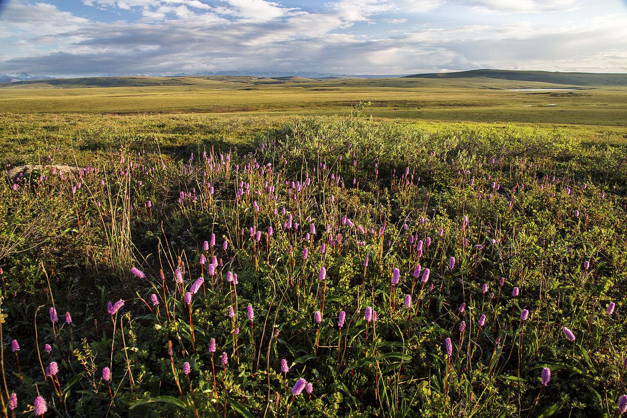 My Public Lands Roadtrip- Dalton Highway in Alaska 19123539440jpg