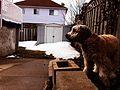 My father's back yard (15436733357).jpg
