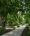 Naddniprianske Arboretum of Agriculture Institute of Southern Region 04 (YDS 2253).jpg