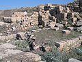 Nahsholim-Tel-Dor-2954.jpg