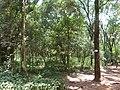 Nairobi Arboretum Park 08.JPG