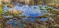 Natte plekken in open heide en ruig grasland. Locatie, natuurgebied Delleboersterheide – Catspoele 11.jpg