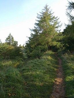 Nature Reserve, Leckhampton Hill - geograph.org.uk - 976765