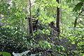 Nature contre écluse-001.JPG