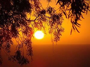 Nature sunlight.jpg