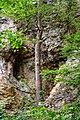 Naturschutzgebiet Saupark - Kleiner Deister - Felsformation der oberen Jura (Korallenoolith) (5).jpg