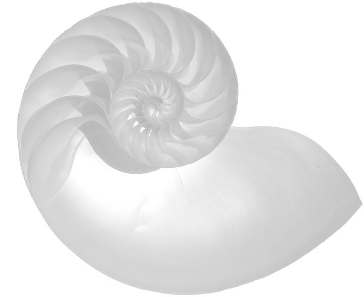 File:NautilusCutawayLogarithmicSpiralClear.jpg