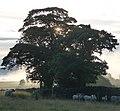 Near Malking Tower Farm - panoramio.jpg